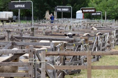 Sheep yards